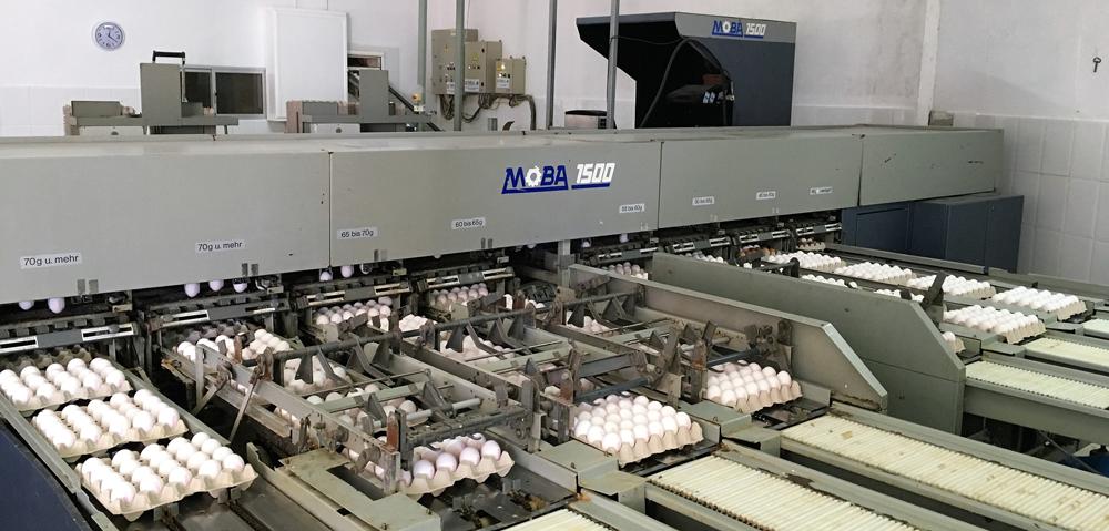 clasificadora de huevos